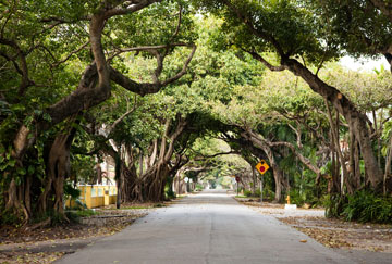 Sendero Old Cutler Trail de Coral Gables